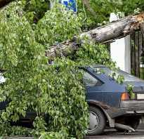 Что делать, если упало дерево или сосулька на машину? список действий